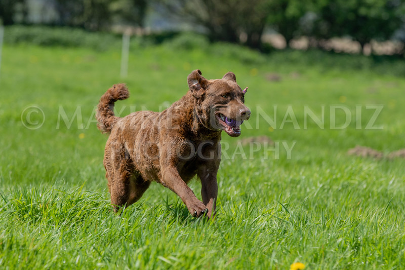 Dogs-7572