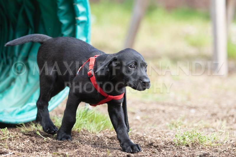 Puppy Agility 15 July 2021-8245