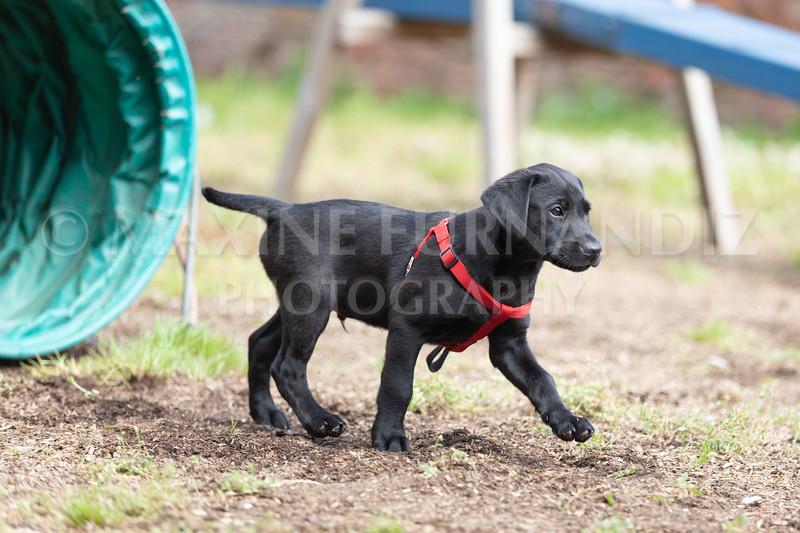 Puppy Agility 15 July 2021-8246