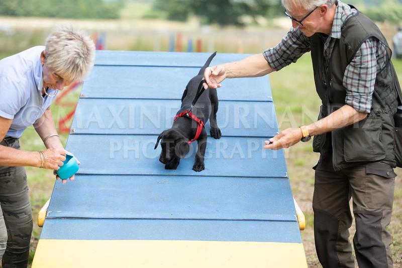 Puppy Agility 15 July 2021-8330