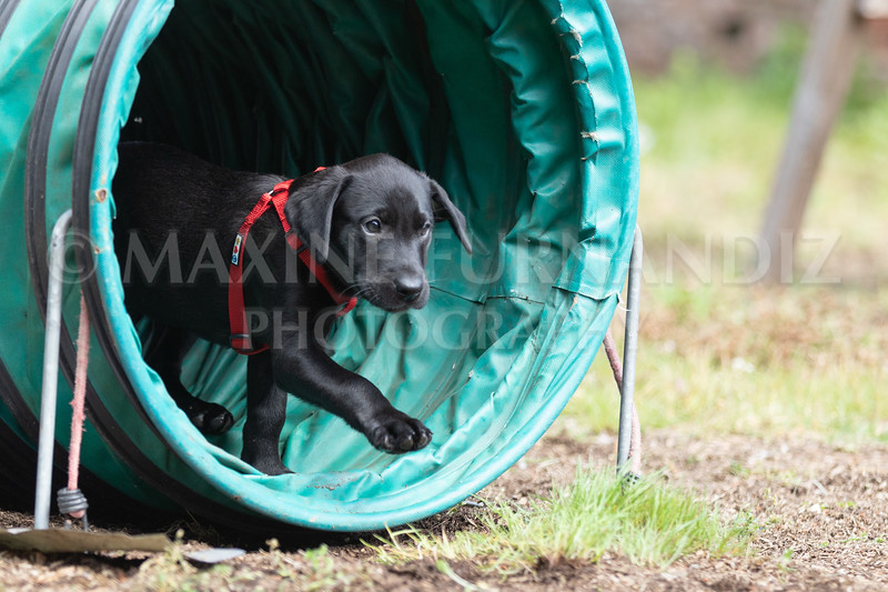 Puppy Agility 15 July 2021-8243