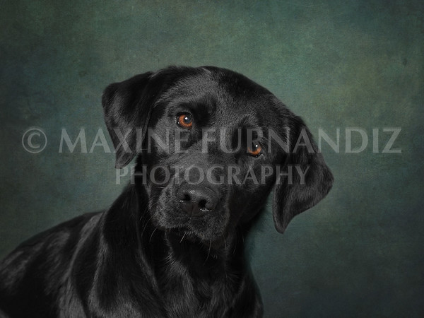 Teal background Jenny 21 x 16 inches 300dpi-9442