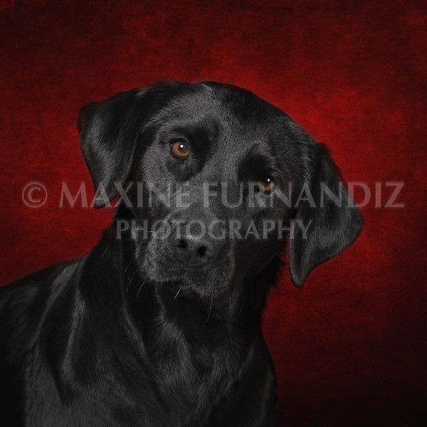 RED background Jenny 21 x 16 inches 300dpi-9442