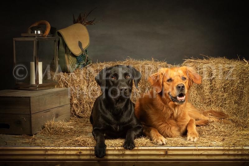 Archie & Howie Steve Lax 24 June 2021-6755-Edit copy