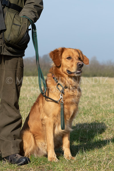 Dog Training Novice GD Feb2019-5729