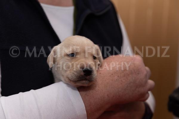 Sky Puppies 3 weeks old-5170