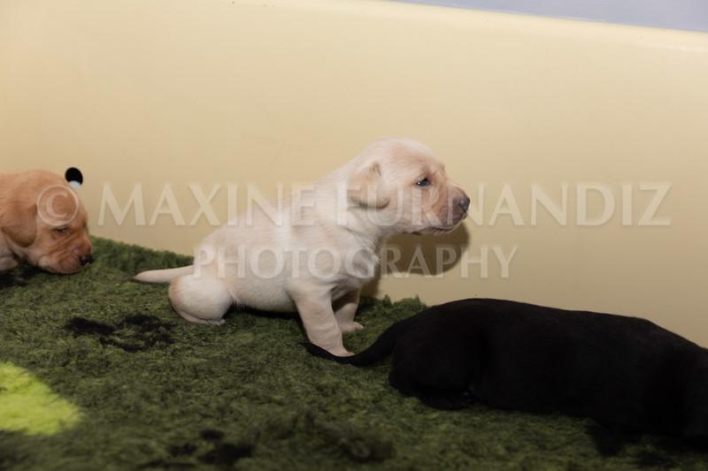 Sky Puppies 3 weeks old-5186