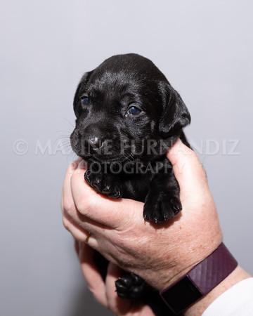 Sky Puppies 3 weeks old-5173