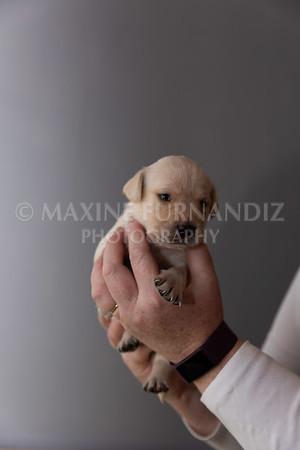 Sky Puppies 3 weeks old-5168