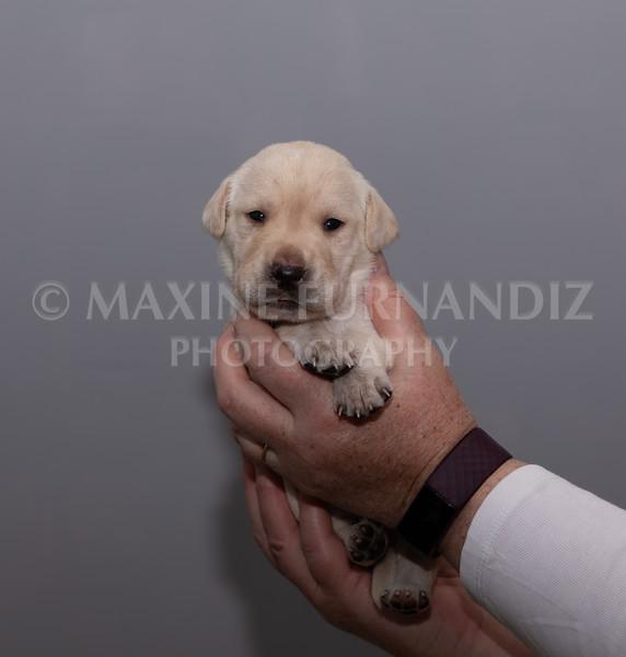 Sky Puppies 3 weeks old-5183