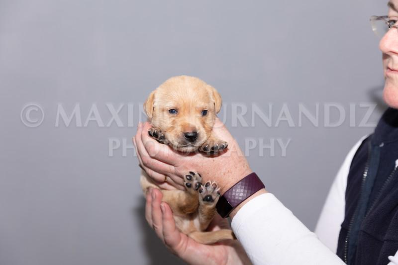 Sky Puppies 3 weeks old-5179