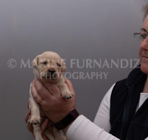 Sky Puppies 3 weeks old-5167