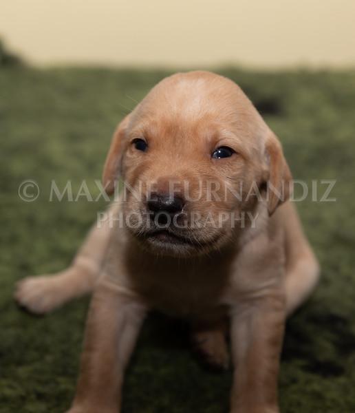 Sky Puppies 3 weeks old-5160