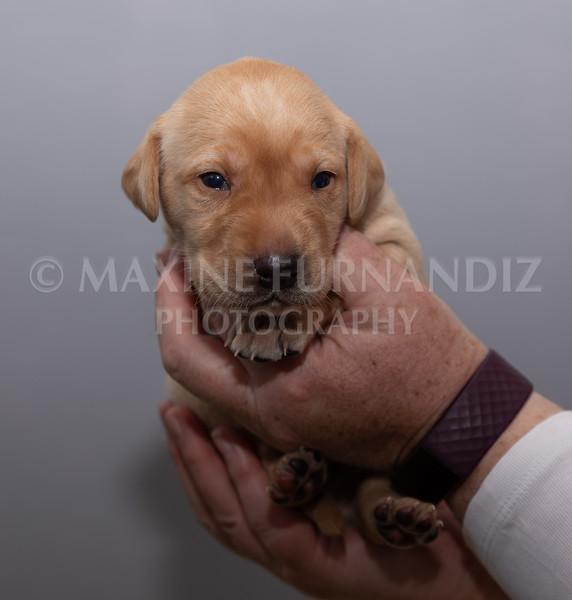 Sky Puppies 3 weeks old-5184
