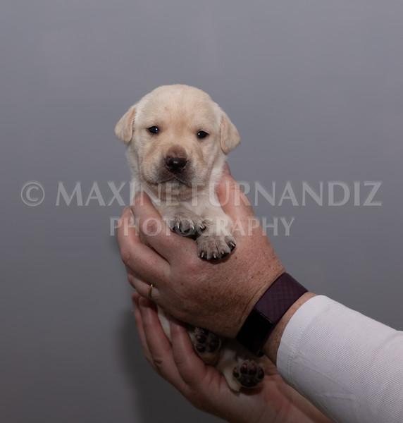 Sky Puppies 3 weeks old-5182