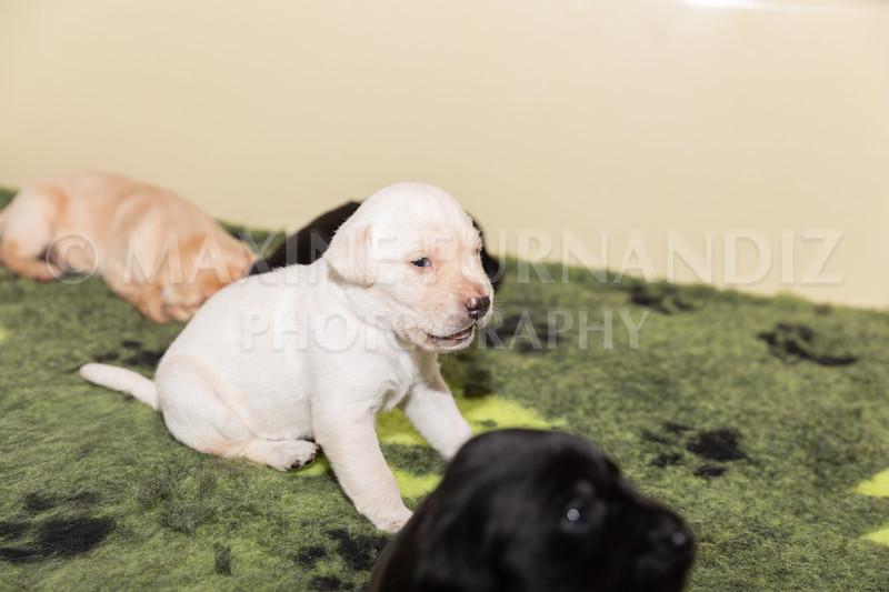 Sky Puppies 3 weeks old-5178