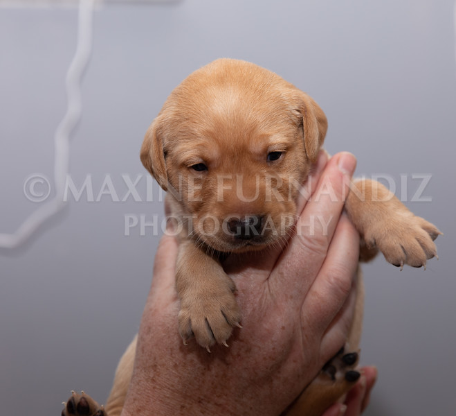 Sky Puppies 3 weeks old-5164