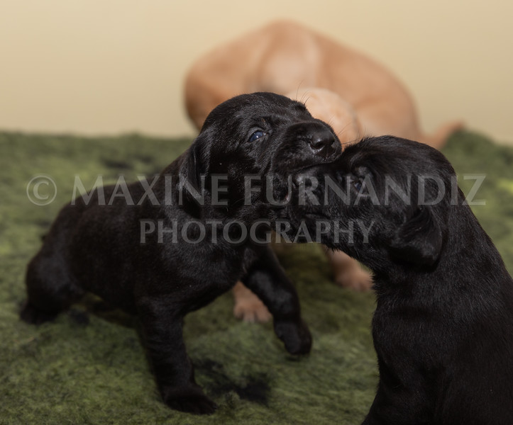 Sky Puppies 3 weeks old-5159