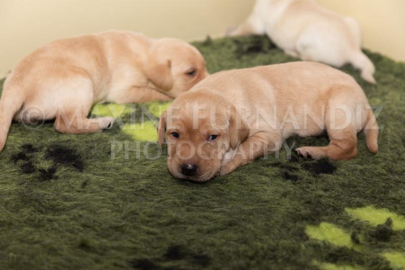 Sky Puppies 3 weeks old-5188