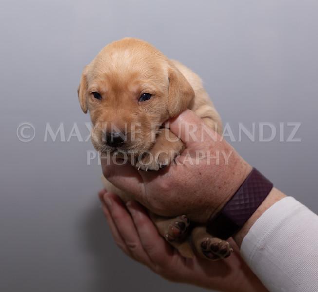 Sky Puppies 3 weeks old-5185