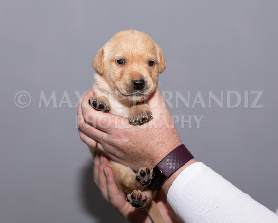 Sky Puppies 3 weeks old-5180