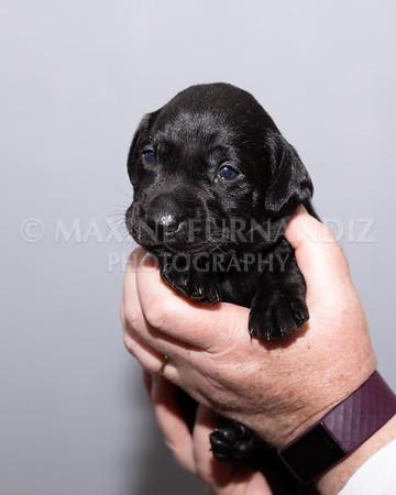 Sky Puppies 3 weeks old-5174