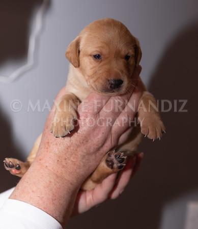 Sky Puppies 3 weeks old-5165
