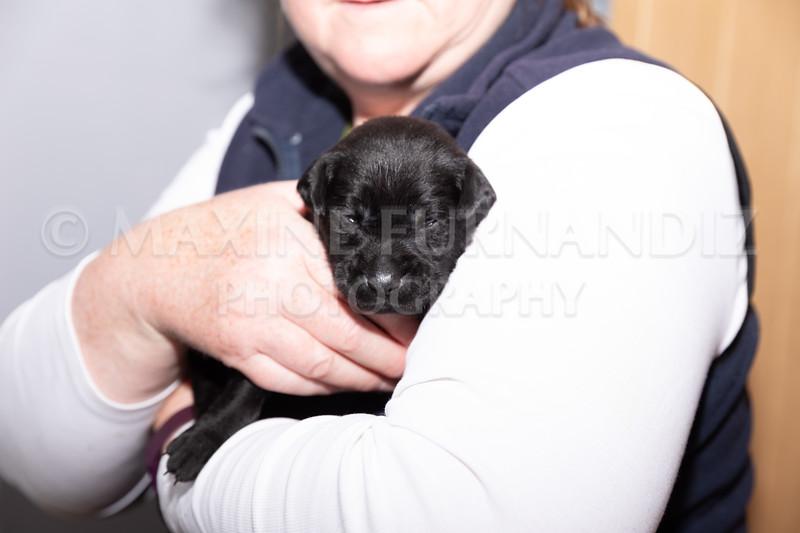 Sky Puppies 3 weeks old-5177