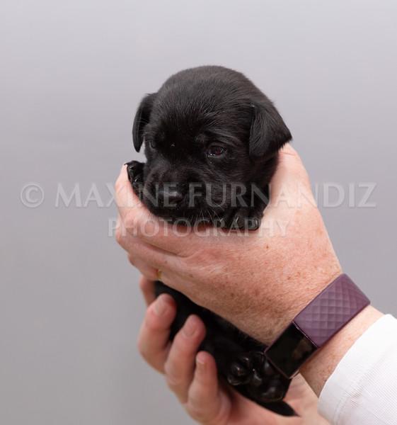 Sky Puppies 3 weeks old-5171