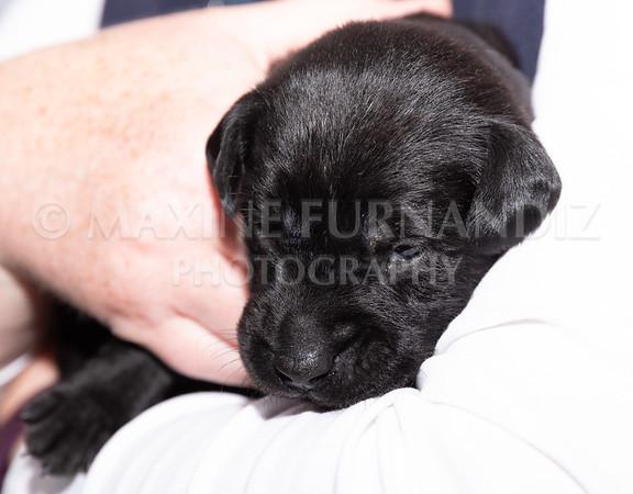 Sky Puppies 3 weeks old-5176