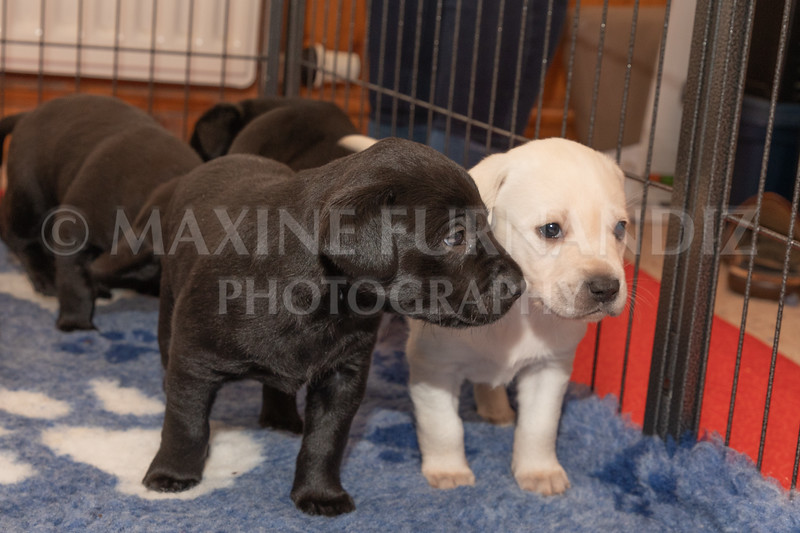 Weika Puppies 2 Mar 2019-8461
