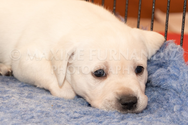 Weika Puppies 2 Mar 2019-8468