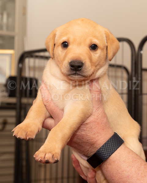 Weika Puppies 2 Mar 2019-8446