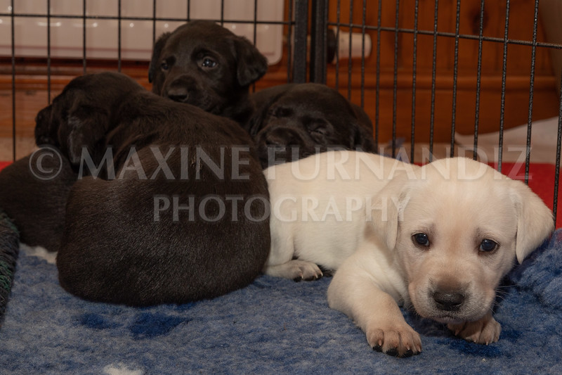 Weika Puppies 2 Mar 2019-8473
