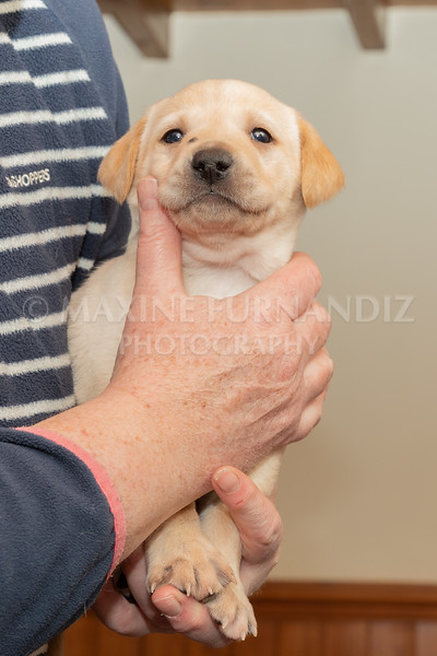 Weika Puppies 2 Mar 2019-8452