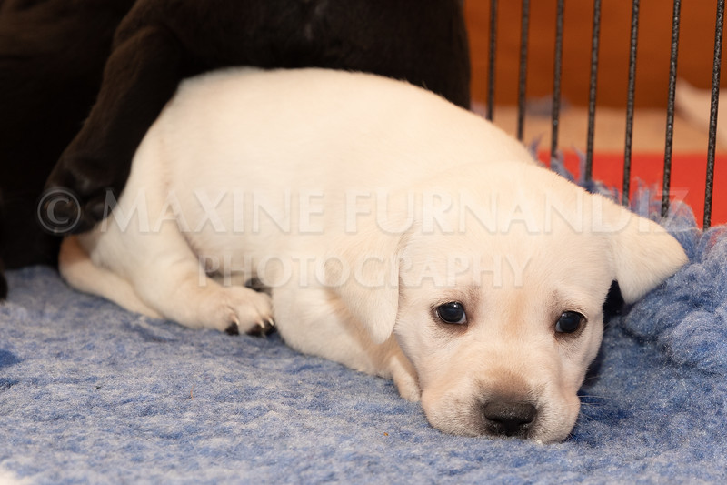 Weika Puppies 2 Mar 2019-8467