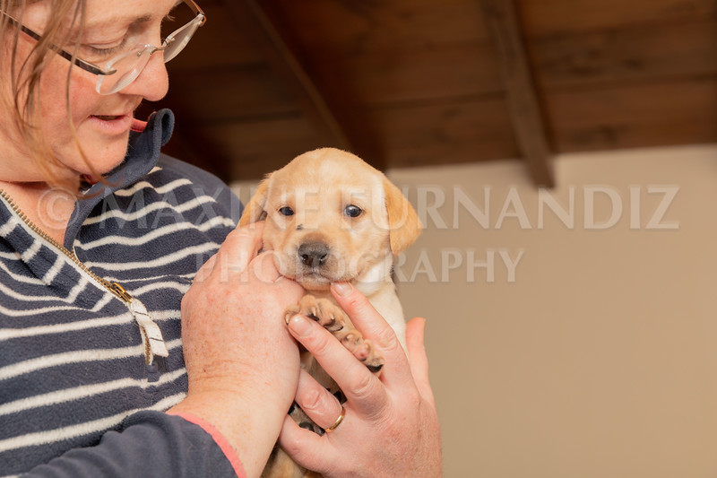 Weika Puppies 2 Mar 2019-8454