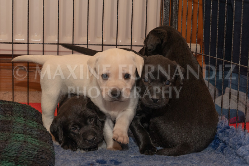 Weika Puppies 2 Mar 2019-8460