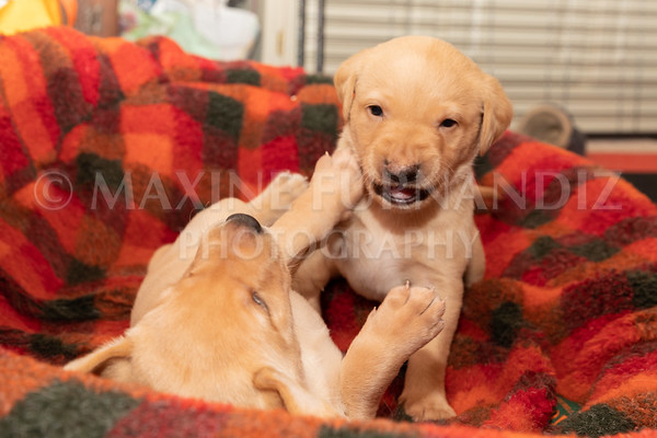 Weika Puppies 2 Mar 2019-8443