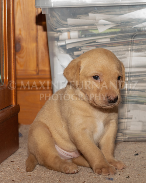 Weika Puppies 2 Mar 2019-8477
