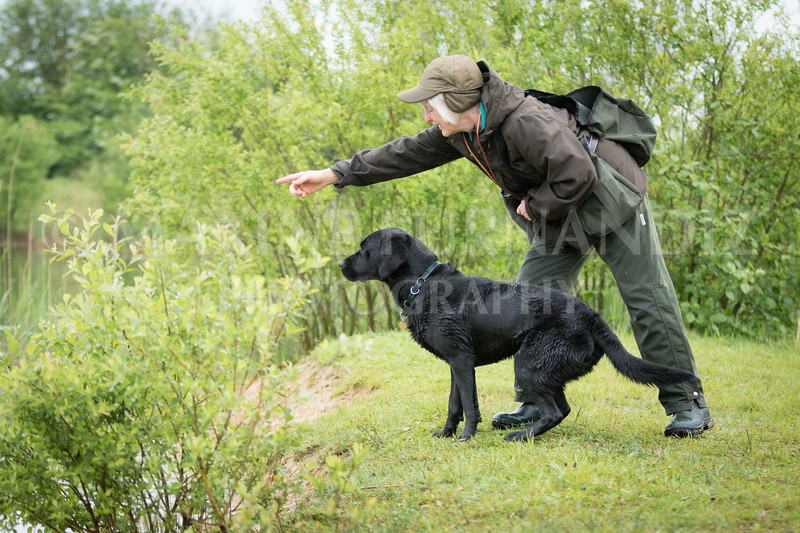 Novice Gundog May 2017-3306-2