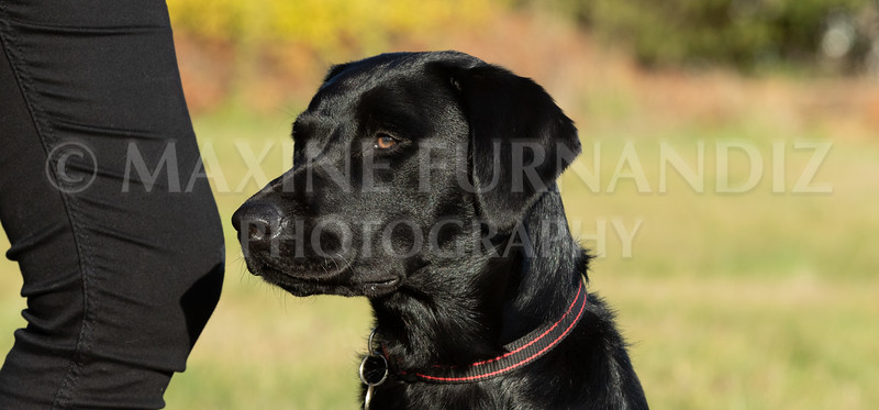Dogs-3405