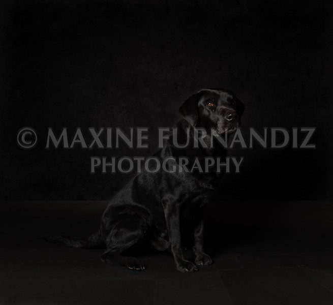 Dogs-8648-Edit