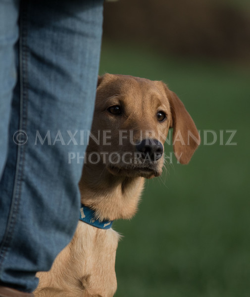 Puppy YOung Dog-0779