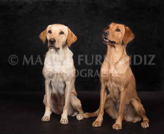Dogs-2628-Edit
