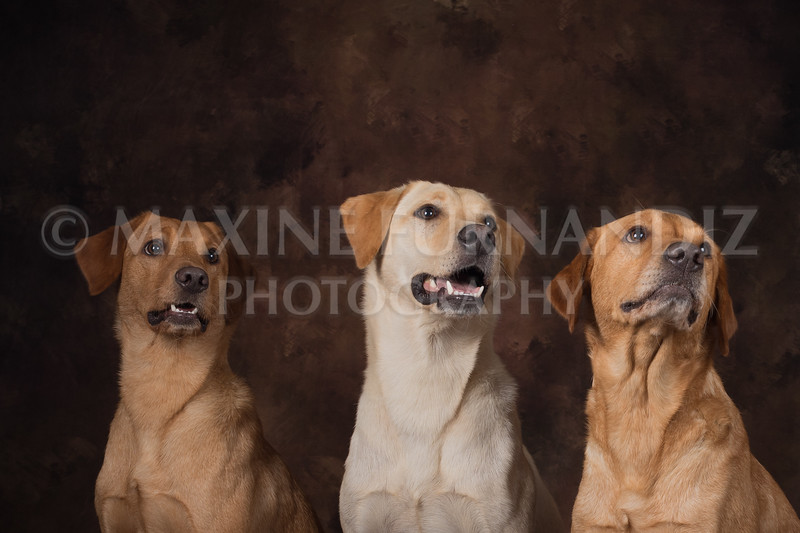 Dogs-2387