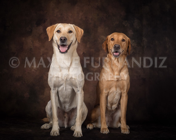 Dogs-2408-Edit