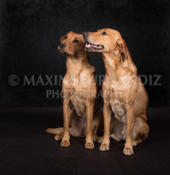 Dogs-2607-Edit