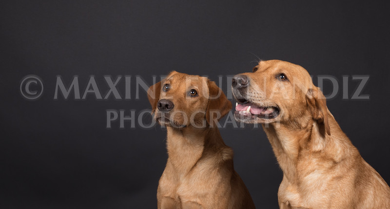Dogs-2609