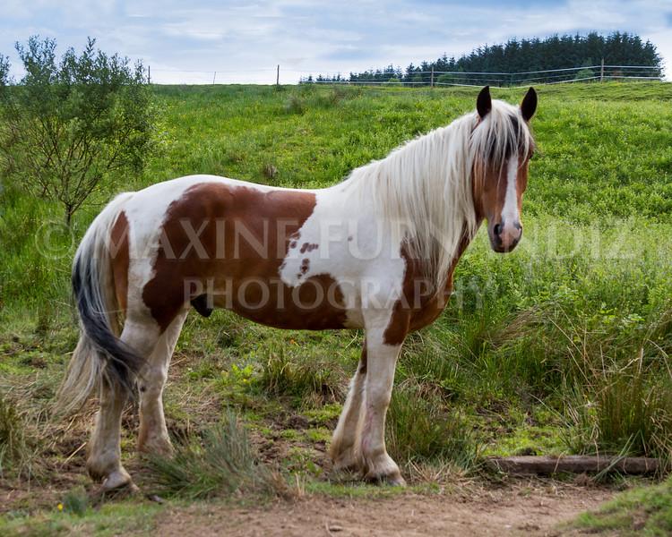 Cumbria IN June 2016-8693-Edit